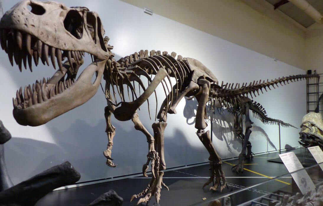 Fósil de dinosaurio conservado en el Museo de Ciencias Naturales de Madrid, España