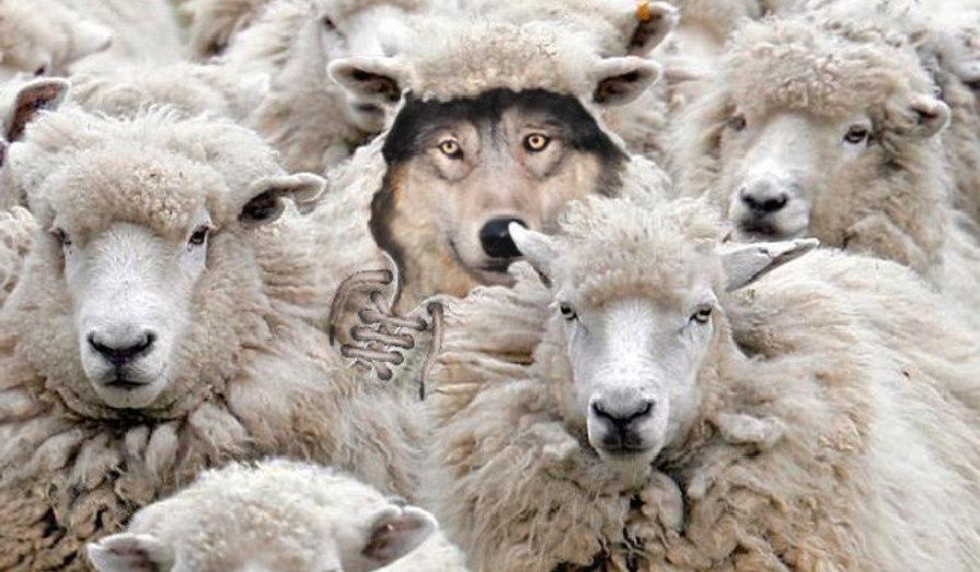 false friends, false cognates